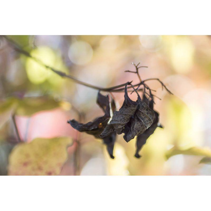 Avis de la galerie - Douceur d automne par Lily Holloway