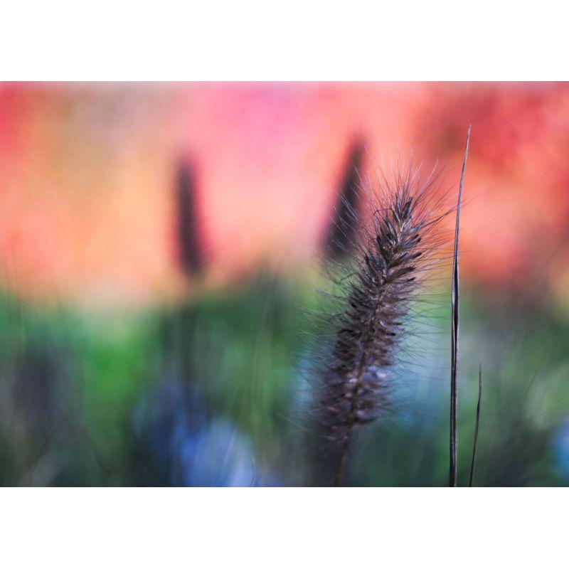 Photographie d'art par Lily Holloway vendue par New Concept Art Photo Selling