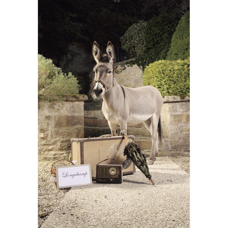 Photographie d'art d'une mise en scène avec un âne par Virginie Georges vendue sur new concept art photo selling