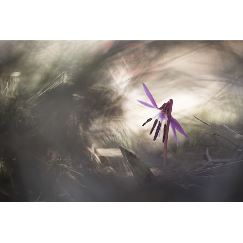 Photographie d'art par Greg Perrin vendue sur new concept art photo selling